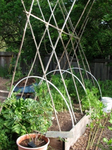 The current bamboo structure in this bed, plus some removable PVC hoops used for frostcloth/shadecloth.